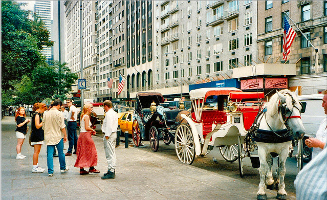 Carriage horses at Central Park